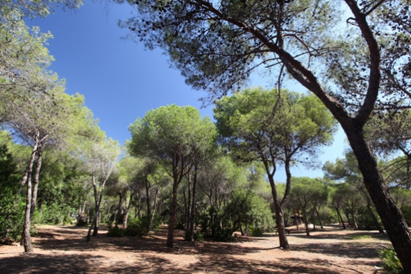 Marbella-Direct-nagueles-park
